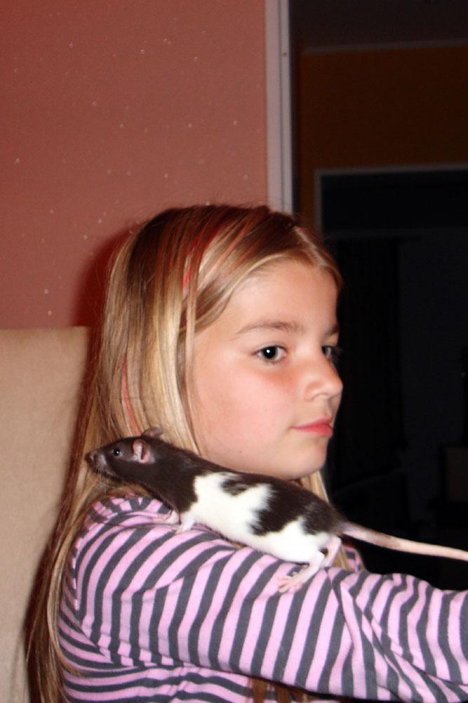 Крысы как домашние животные