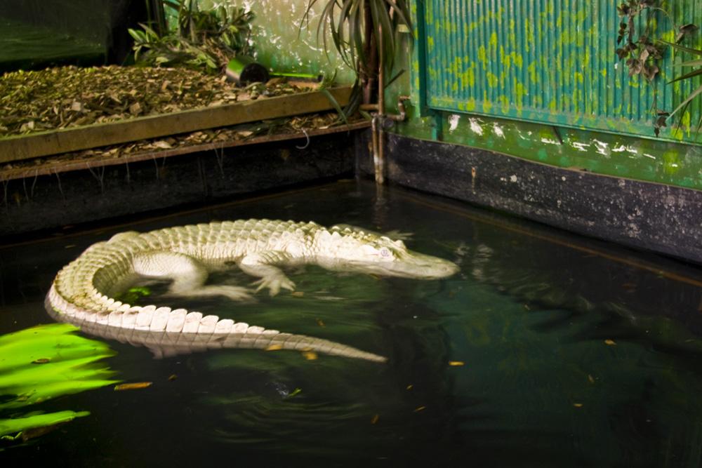Зоопарк-рептилярий в Ахене