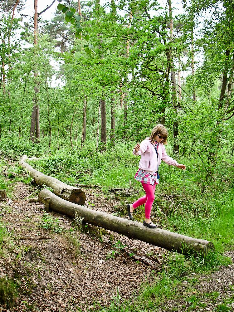 Голландский лес